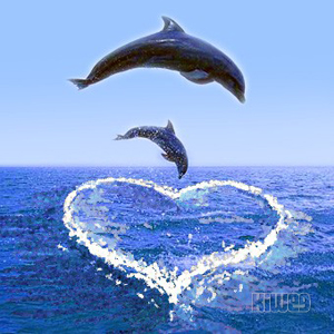 Cute Dolphin Backgrounds 3